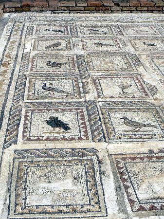 แหล่งโบราณคดีอิตาลิกา: mosaico degli uccelli