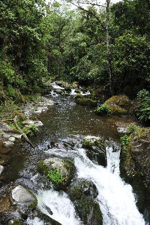 Hotel de Montaña y Restaurante Suria: Río Savegre