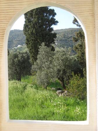 Villa Korthi: A landscape of olive, cypress and lemon trees