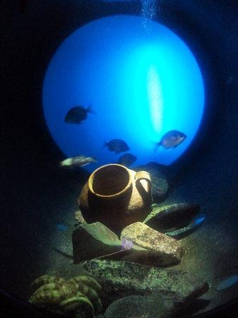 Porto Moniz, Portugal: Aquarium Madeira 2