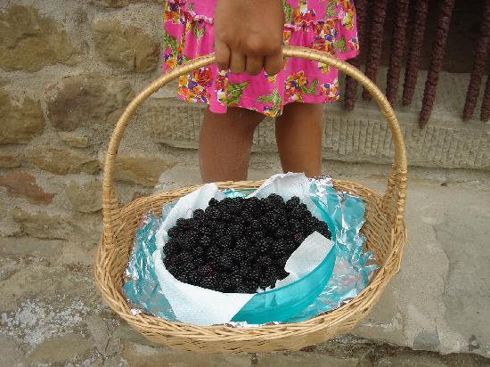 Agriturismo Acquaviva: .... prima della marmellata......