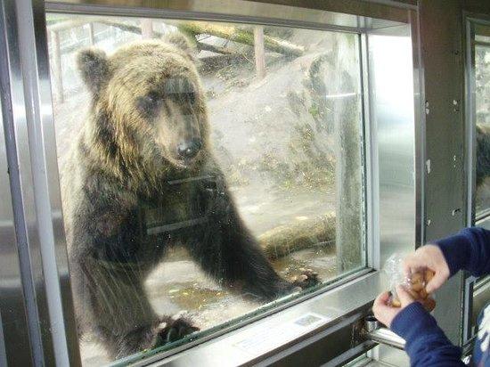 登别熊牧场