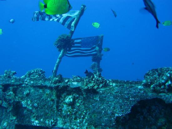 Reef Pirates Diving: Ship Wreck