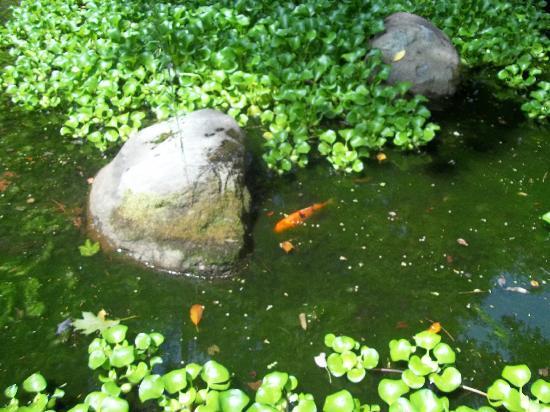 Chinqua Penn Plantation: Koa Pond