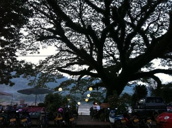 Big Tree Cafe: lovely spot