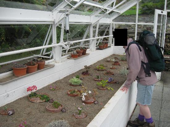 Holehird Gardens: Inside a greenhouse