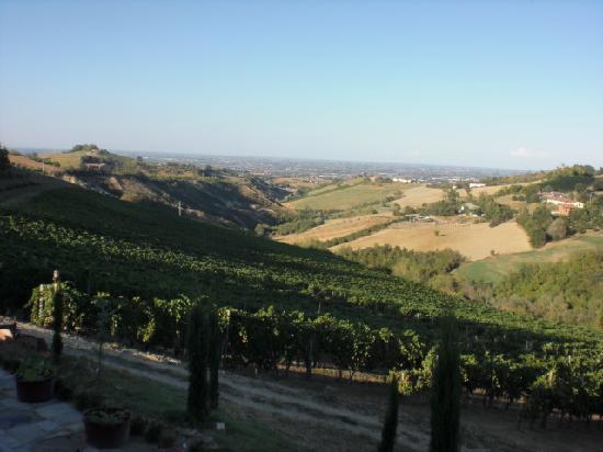 Agriturismo Acetaia Sereni: Le vigne