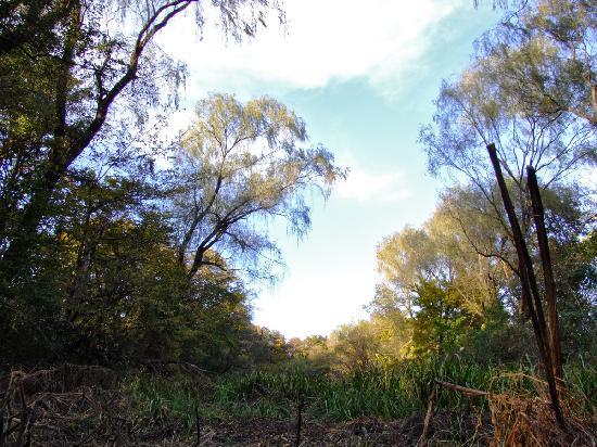 Akigase Park: まるでジャングルです。