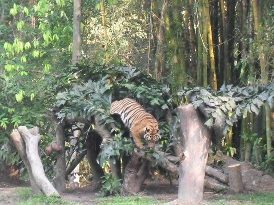 Ampang, Malaysia: Lions