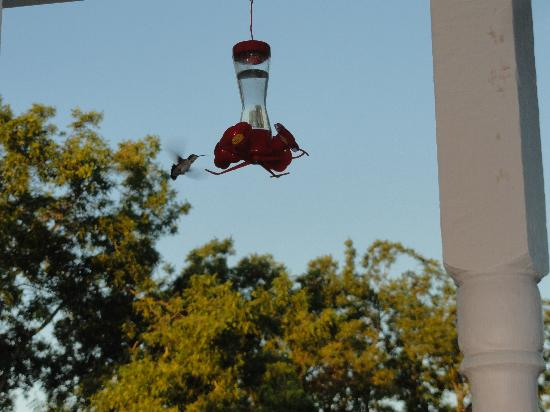 Sunrise Farm Bed and Breakfast: Enjoy the hummingbirds!