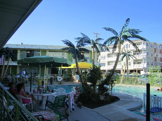 Caribbean Motel: The pool and the plastic palm trees.