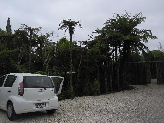 Te Tiro: Parking area and neat NZ vegetation!
