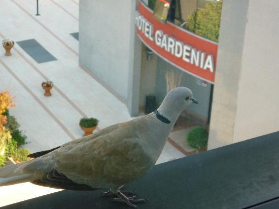 Gardenia: le gustaban las vistas...