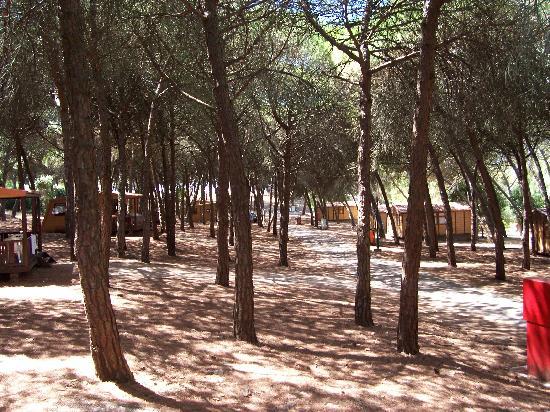 Lisboa Camping & Bungalows : Bungalow