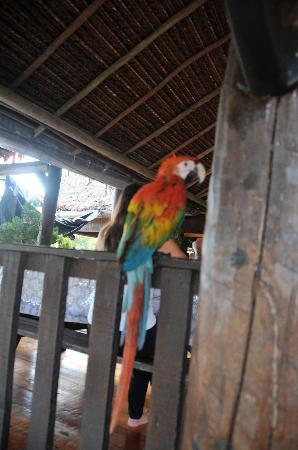 Yakuruna Guest House : même le perroquet est sympa !!