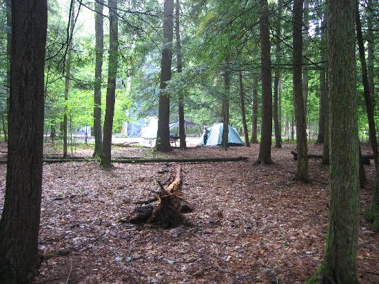 Chenango Valley State Park Campground: Campsite from the edge of the bog