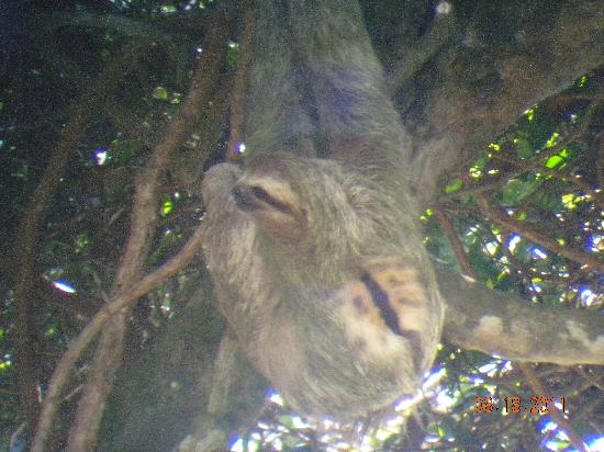 Playa Manuel Antonio: Sloth taken with a digital by Mauricio