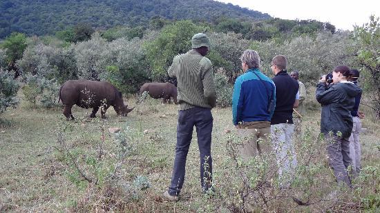 Bushbuck Mara Camp: White Rhino