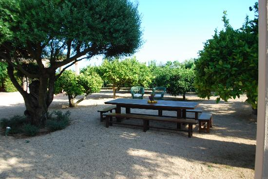 Agroturismo Ca n'Arabi: Orange Grove