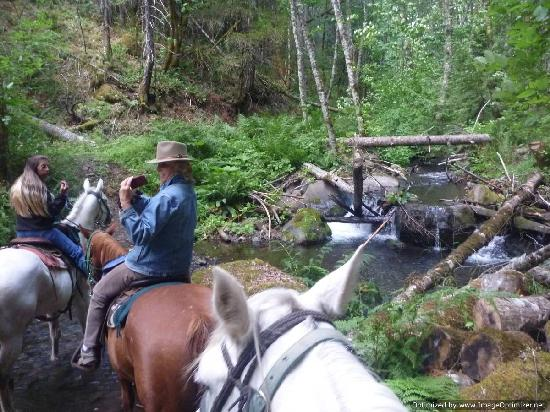 Northwestern Lake Riding Stables: Creek Crossing