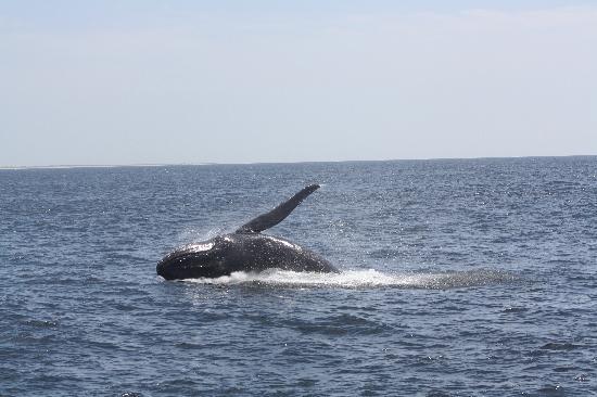 Brewster, MA: Baleine Provincetown
