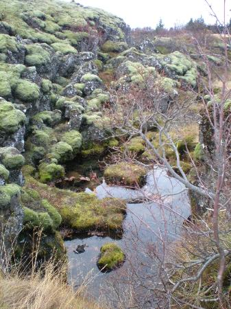 Thingvellir National Park: Basalt and moss comprised most of the park