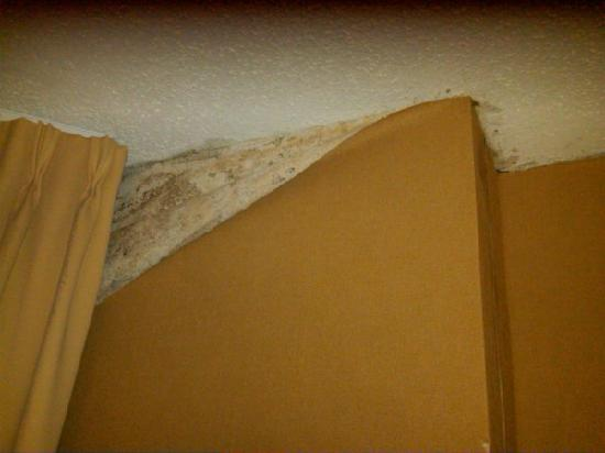 Four Points by Sheraton Richmond: mold?