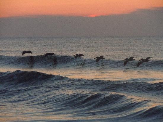 Kure Beach, NC: Pelicans flying at sunrise