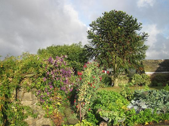 Back Garden Cowclose Farm