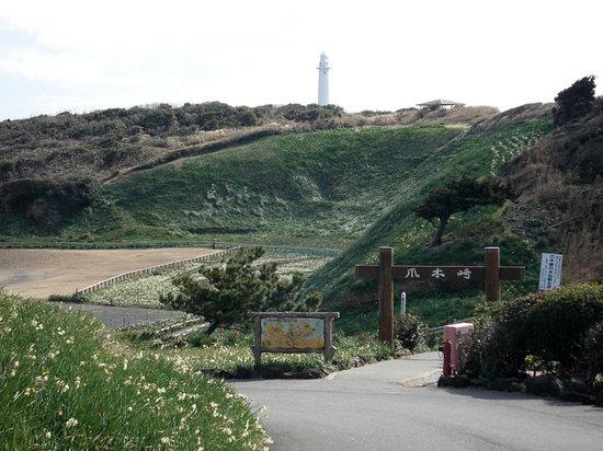 Tsumekizaki : 水仙群に続く道。奥に灯台も。