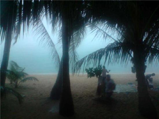 Lolita Bungalows: coconut trees