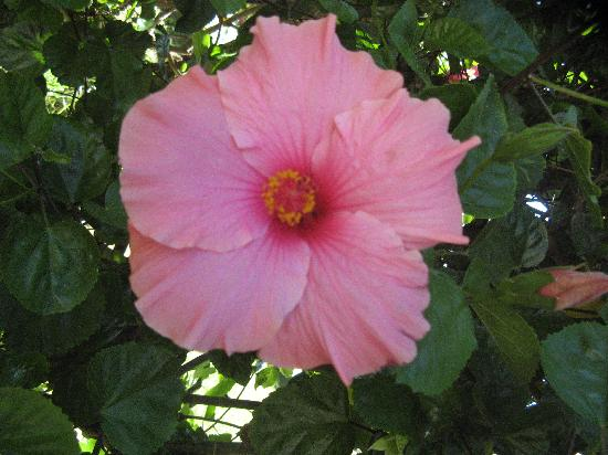 Residence la Chimera: Un esempio dei bellissimi fiori di cui è pieno il residence