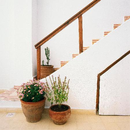 Dar Lazuli : Stairs to 2nd Terrace
