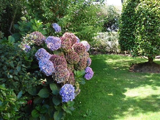 Sunnydene Country Hotel: Beautiful flowers in the garden