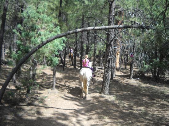 Ruby's Horseback Adventures: riding under pine trees