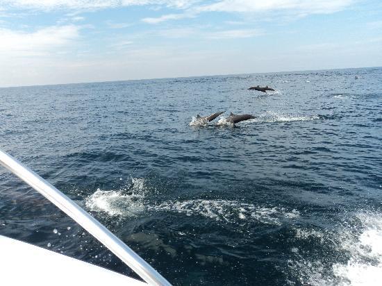 Dreams Huatulco Resort & Spa: Snorkeling Trip