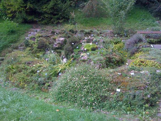 Botanical Garden (Botanischer Garten) : One of the rock gardens at the Bern Botanical Garden