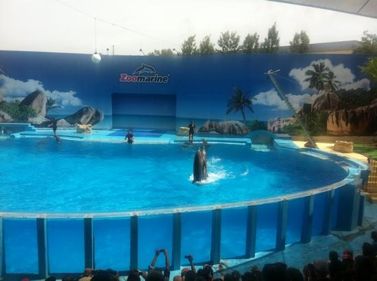 Guia, Portugal: dolphinshow