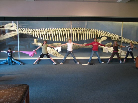 Cambridge, MA: Kronosaurus, Photo by Alicia Zampitella