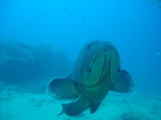 Canary Island Divers Lanzarote Puerto Del Carmen 2019