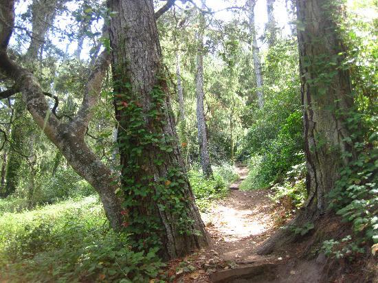 San Simeon State Park: Magical Hike