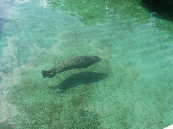 London, Kanada: harbour seal