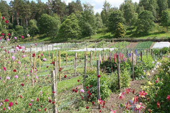 Ballater, UK: Balmoral gardens