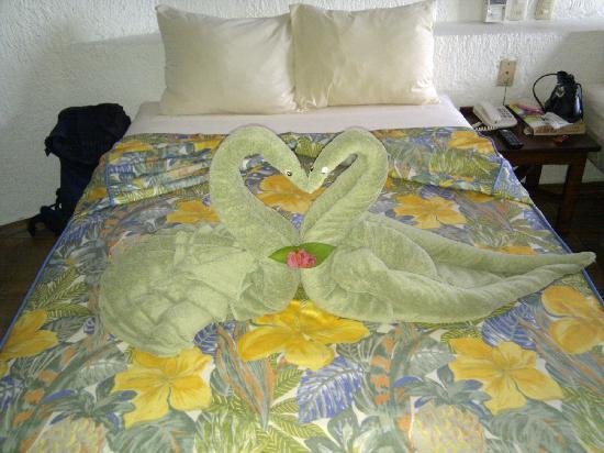 Eco-Hotel El Rey Del Caribe: cigni