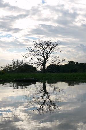 Amazonas (Estado): rio negro