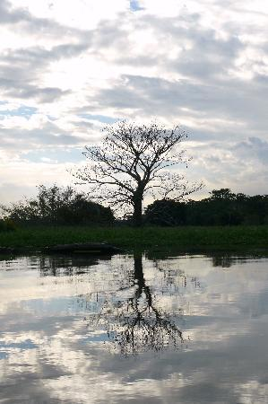 State of Amazonas: rio negro