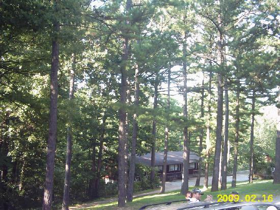 Cardinal Hill Cottages: nice and shaded