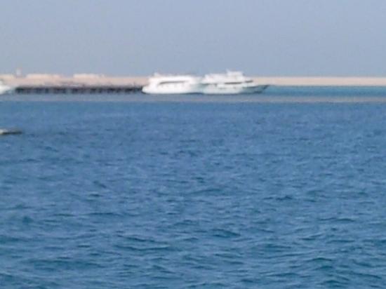 Caribbean World Resorts Soma Bay: Plongée à Tobia harba