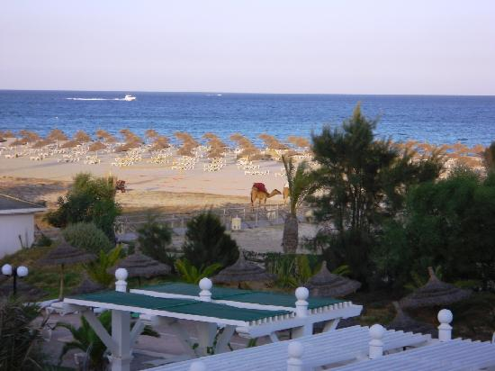 Concorde Hotel Marco Polo: Evening sea view with the camels
