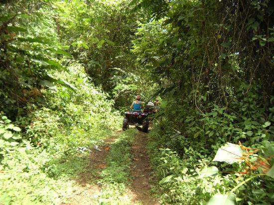 Jungle ATV Quad Tours: Jungle path!